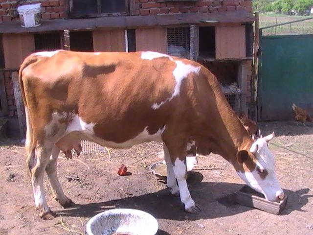 Продам Корову, зображення 1