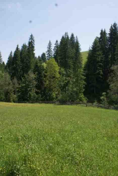 Продається земельна ділянка в с.Вороненка, зображення 1