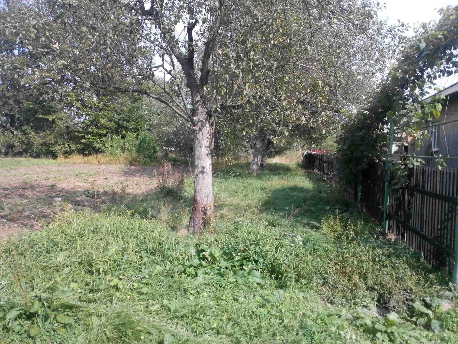 Терміново продам земельну ділянку під забудову., зображення 3