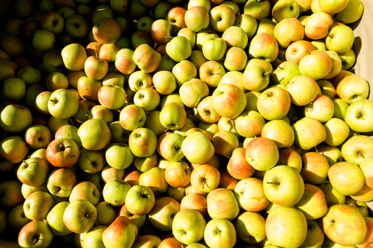 Продам яблоки, зображення 1